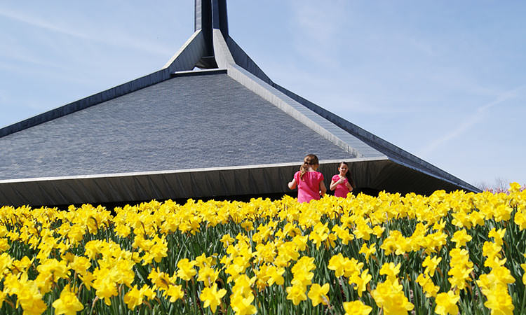 North christian daffodils columbus in 1